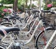 thumbs  - Bicycles available - Hotel Condor Milano Marittima (37/40)